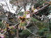 20070329sakura01