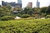 20080413tsutsuji01