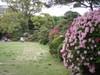 20080426tsutsuji03