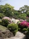 20080430tsutsuji03