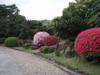 20080502tsutsuji07