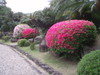 20080509satsuki02