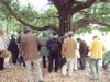 20081124dongurimomiji02