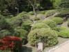 20090419tsutsuji02
