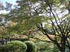 20091104koyo04