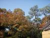 20091107koyo01