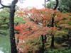 20091114koyo04
