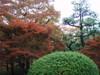 20091114koyo05