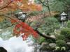 20091118koyo01