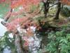20091118koyo02